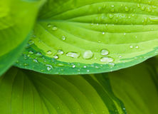 Dew drops on the leaf Stock Images