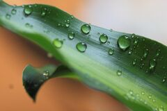 Dew drops on leaf Royalty Free Stock Photography