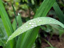 Dew drops on a leaf Stock Images