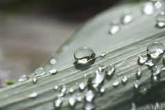 Dew drops on leaf Stock Photos