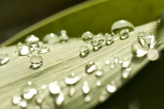 Dew drops on  leaf Stock Photo