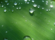 Dew drops on a leaf Royalty Free Stock Photo
