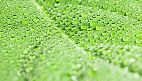 Dew drops on leaf Royalty Free Stock Photo