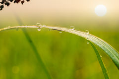 Dew drops on leave with sun Royalty Free Stock Photos