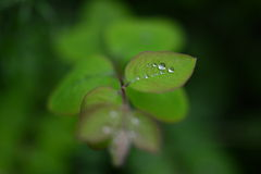 Dew drops on leaves Stock Images