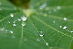 Dew drops on leaves Stock Image