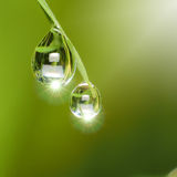 Dew drops with Light Fair. On green Stock Images