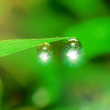 Dew drops with Light Fair. On green Royalty Free Stock Images
