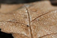 Dew drops macro Stock Image