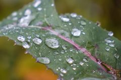Dew drops. Morning dew on the plant in soft focus. Shallow depth of field stock images