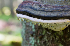 Dew drops on mushroom Stock Photography