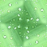 Dew Drops On Green Leaf Pattern Stock Photography