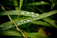 Dew drops. Over green leave Royalty Free Stock Image