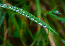 Dew drops. Over green leave Stock Image