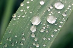 Dew drops on plant leaf Royalty Free Stock Photos