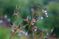 Dew drops on the plants Royalty Free Stock Photography