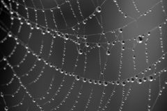 Dew Drops on Spider Web Stock Image