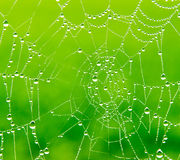 Dew drops on a spider web Royalty Free Stock Images
