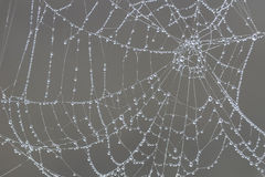 Dew drops on spider web Stock Photos