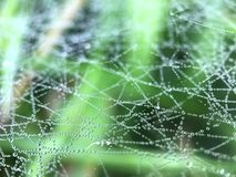 Dew drops on a spider web Stock Image
