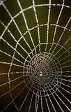 Dew drops on a spider web Royalty Free Stock Photo