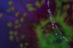 Dew drops in a spider web. Stock Photos