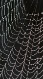 Dew drops on spiderweb Stock Image