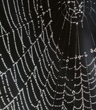 Dew drops on spiderweb Stock Photos