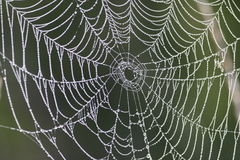 Dew Drops on Spiderweb. The shot was taken in a foggy morning. The dew drops covered neatly the entire spider web, and highlight the amazing structure of the web royalty free stock photos