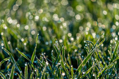 Dew Drops in Spring on a fresh Meadow Royalty Free Stock Images