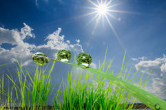 Dew drops  with sunlight Royalty Free Stock Photo