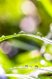 Dew drops in sunshine Stock Photos