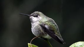 Dew drops and water sitting on hummingbird in winter