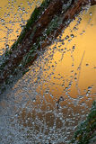 Dew drops on a web. Royalty Free Stock Photo