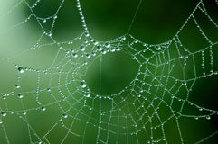 Dew Drops on Web Stock Images