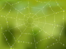 Dew drops on the web with nature background. Vector illustration Royalty Free Stock Photos