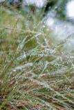 Dew drops Stock Photos