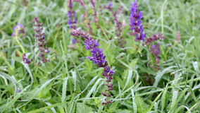 Dew drops on wild flowers stock footage