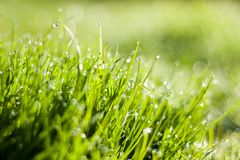 The dew in fresh grass Stock Photography