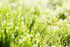 The dew in fresh grass Stock Photos