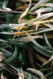 Dew and frost on the grass stock photo