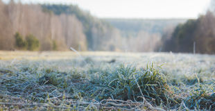 Dew and frost on the grass in forest, morning in urals, landscape Stock Photography