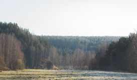 Dew and frost on the grass in forest, morning in urals, landscape, wide angle Stock Images