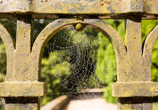 Dew glistening cobweb on gate Stock Images