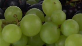 Dew on grapes. Macro shallow focus pan shot. Hd stock video footage