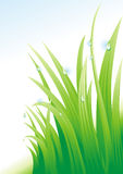 Dew on a grass. (vector illustration Royalty Free Stock Images