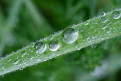 Dew on grass Stock Images