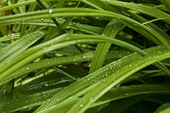 Dew on the grass. Dew on the green grass Stock Images
