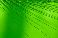 Dew on grass. Macro of grass spikes with water drops on green background Royalty Free Stock Photography