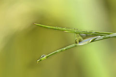 Dew in grass Stock Image